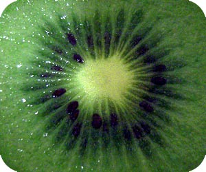 kiwifruit picture