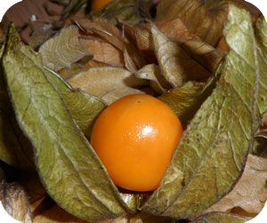 physalis picture